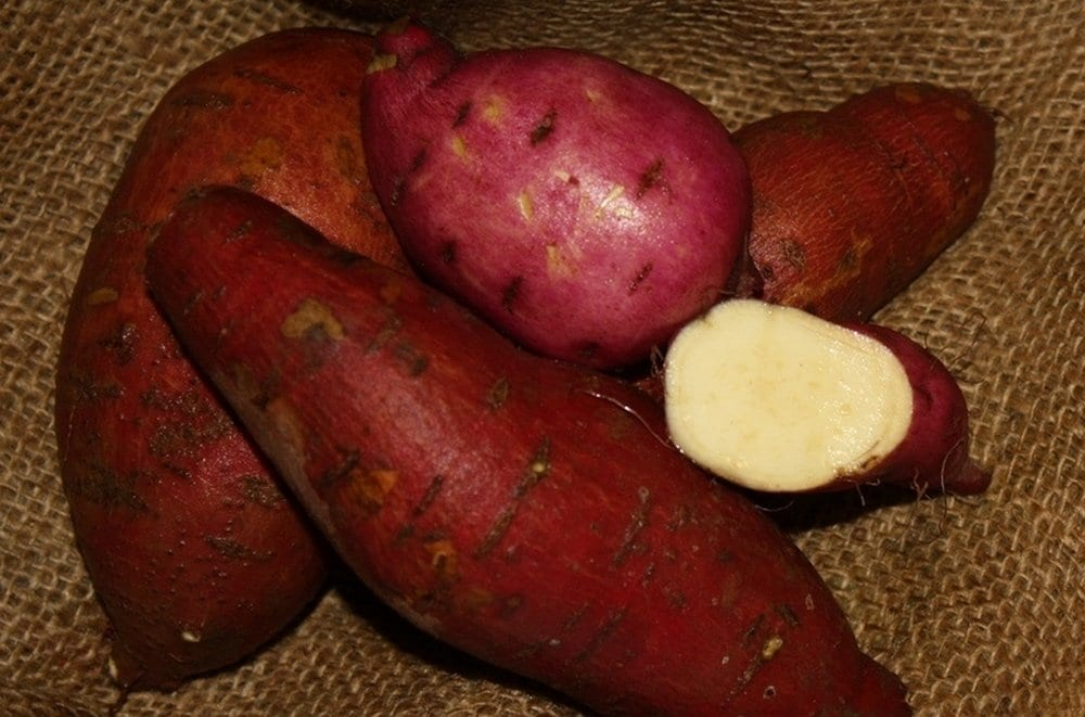 15 Reasons Why Sweet Potatoes Are Perfect For Diabetics