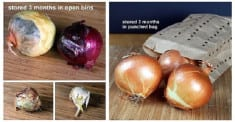 How To Store Your Garlic & Onions So They Last For Months!