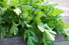 This Herb Kills Even 86% of Lung Cancer Cells