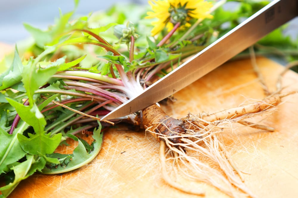 Wholesome properties of Dandelion Root