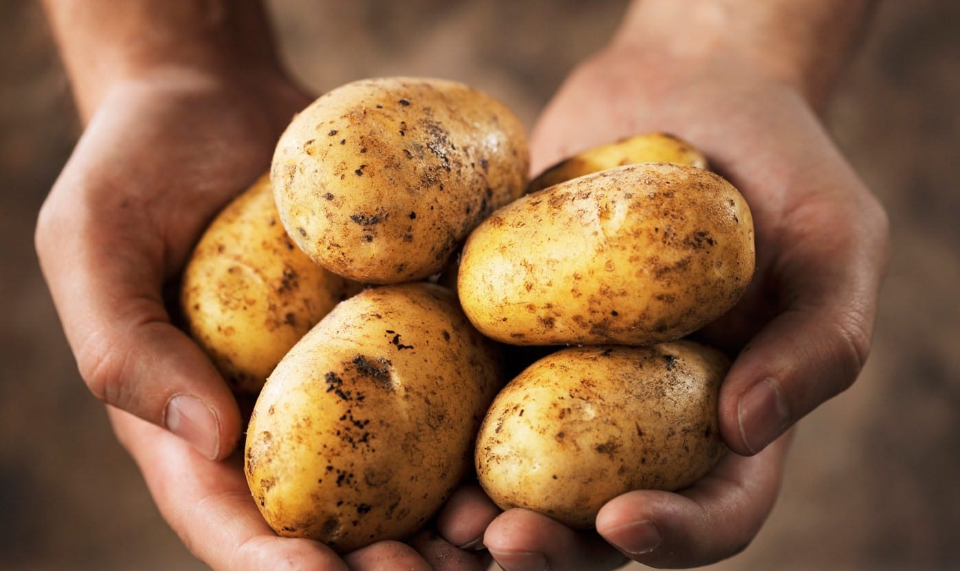 Potatoes in the hands