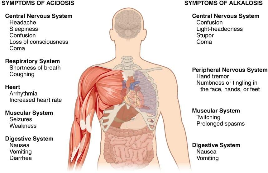 regulatpro metabolic test