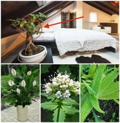If You Want Better Sleep, Put These 10-Air Purifying Plants Next To Your Bed!