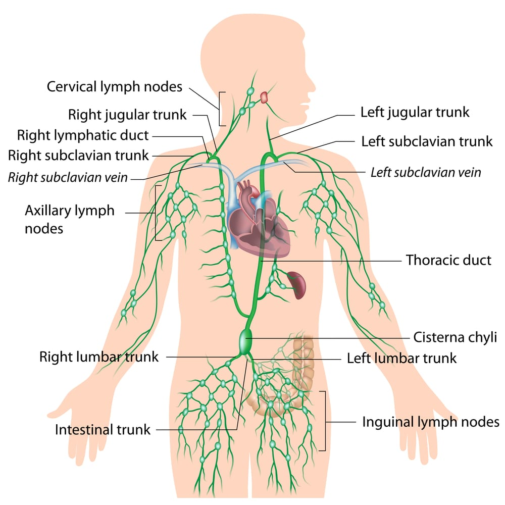 11 Ways To Cleanse Your Lymph System