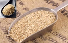 Sesame – Seeds Of Youth And Fighter Against Bad Cholesterol