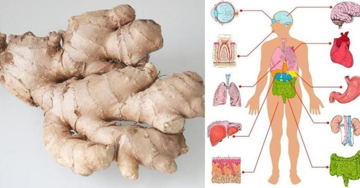 If You Eat Ginger Every Day For A Month, You Will Notice Some Wonderful Changes In Your Health!