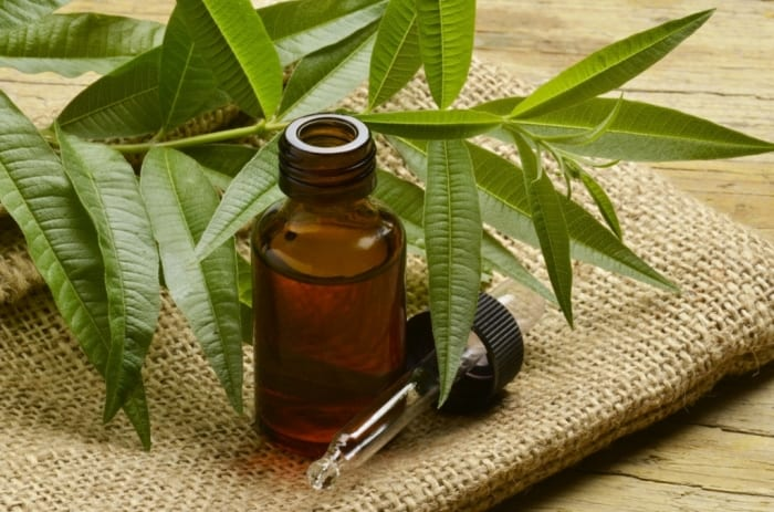 Top 7 essential oils to fight bacterial infections
