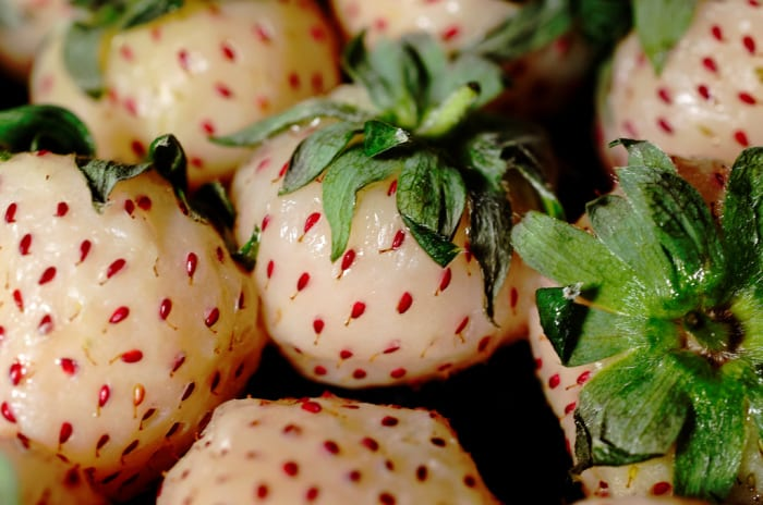 Pineberry – The Unique Healthy Fruit That Tastes Like Pineapple