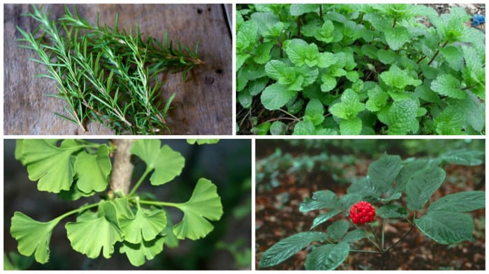 These 4 Herbs Can Protect Your Brain From Alzheimer's, Depression, Anxiety And Much More