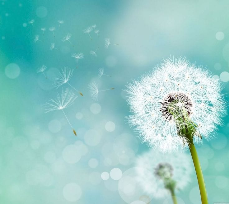 If You Drink Dandelion Tea Every Day, Here's The Incredible Effect On Your Body