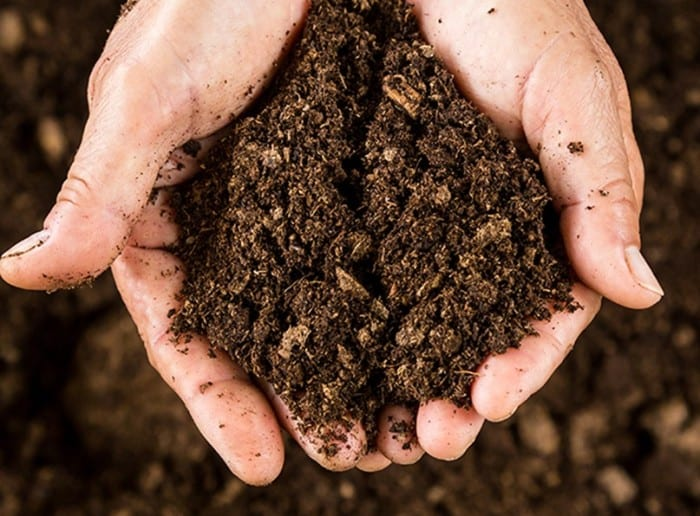 Researchers Find That Gardening Soil is a Natural Antidepressant