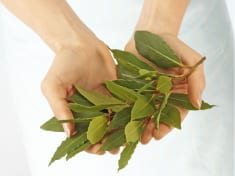 8 Incredible Benefits and Uses of Bay Leaves. Burn Them and the Results Will Amaze You!