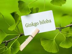 Ginkgo Biloba – Health Benefits and Side Effects