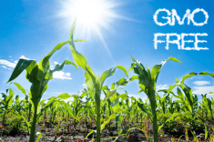 6 GMO Myths You Need To Stop Believing