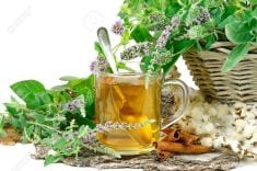 Avoid These Mistakes, If You Want Herbal Tea Health Benefits