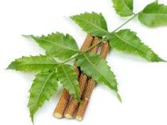 12 Amazing Health Wonders of The Neem Tree