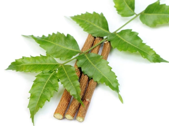 12 Amazing Health Wonders of The Neem Tree