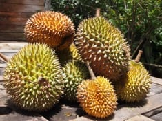 Durian Fruit – Smelly, But Also Incredibly Nutritious