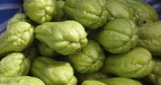 The Miraculous Pear-Shaped Plant – Chayote! After Reading This, You Will Use It Every Day!