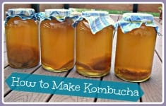 Kombucha: Why They Call it the Tea of Immortality! RECIPE