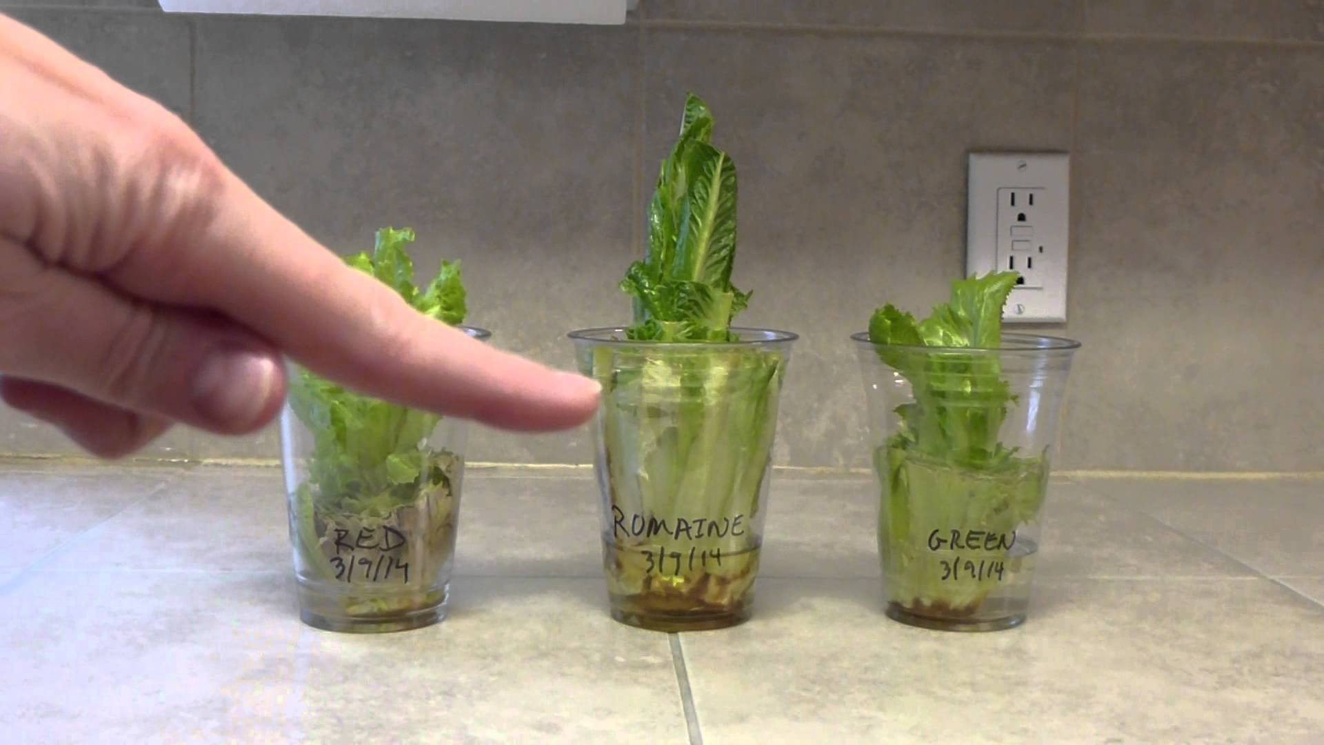 Herbs growing in a container in the kitchen
