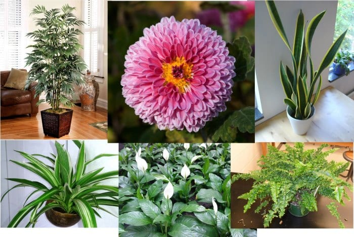 These 12 Plants Will Bring Positive Energy In Your Homes!