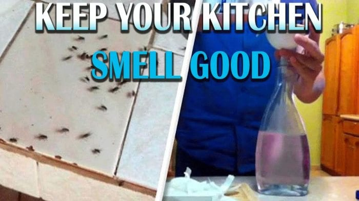 The Simple Trick Your Kitchen Will Smell Amazing and Keep Flies Away