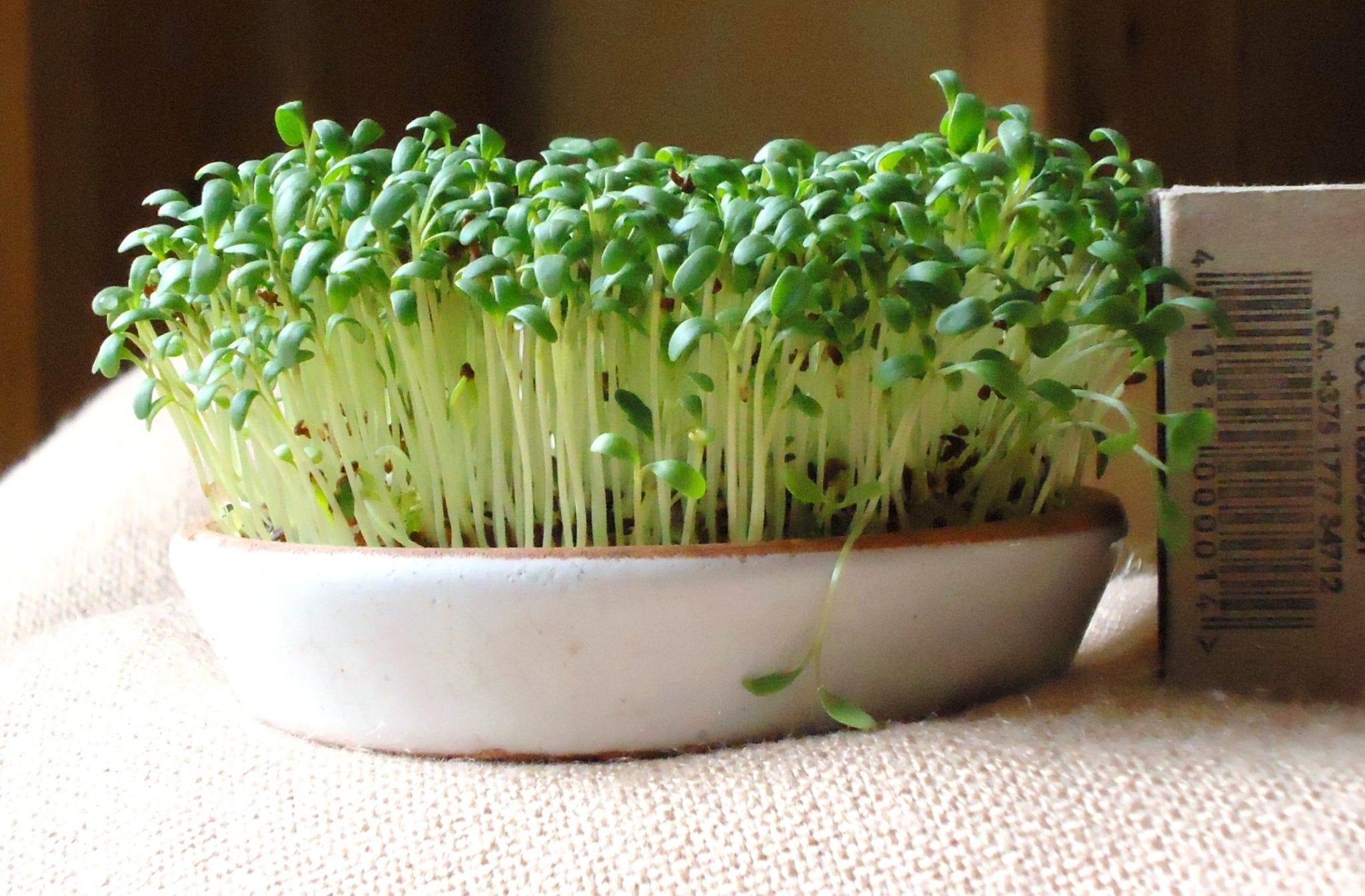 Herbs to Dissolve Uric Acid