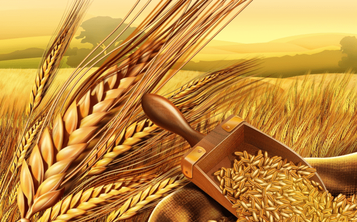 THIS is the Real Reason Why Wheat is Making You Sick!