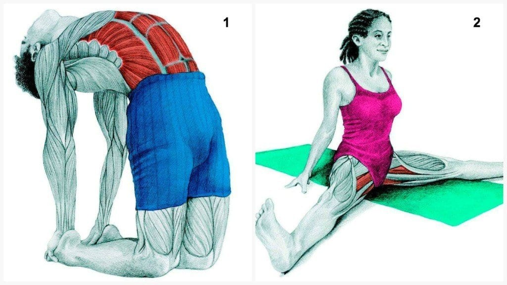 See-Which-Muscle-You-Stretch-When-Doing-These-34-Exercises