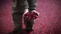 They Said Cranberries Were Good For UTIs, Here's What They Didn't Say About CANCER