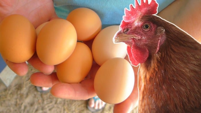 How to Tell If Your Eggs Came From a Sick Chicken (Plus How to Find Healthy)