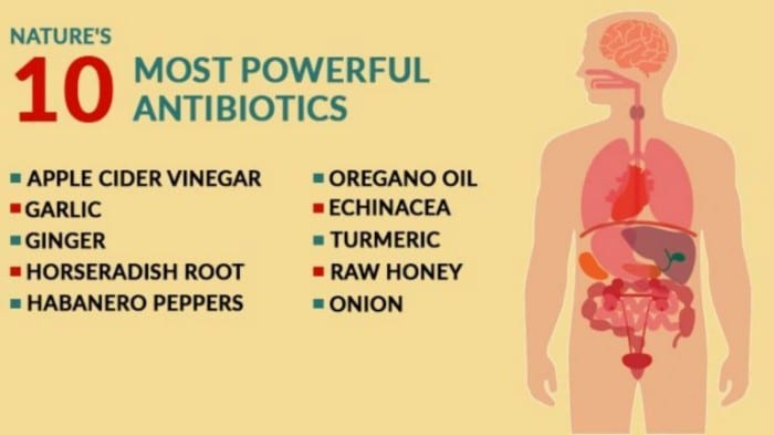 10 most powerful natural antibiotics known to mankind