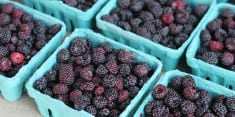 Cancer-Fighting Black Raspberries and Its Many Health Benefits