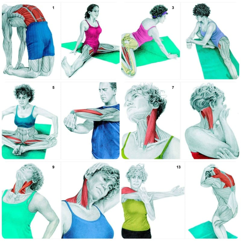 See Which Muscles You Are Stretching When Doing These 34 Exercises (Images)