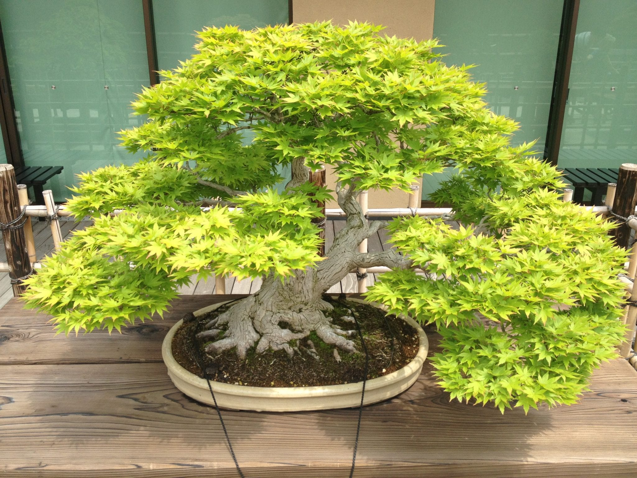 how to make bonsai trees pdf