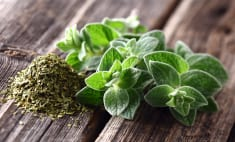 8 Reasons Oregano Should Grow In Every Garden