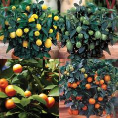FRUITING TREES YOU CAN GROW IN CONTAINERS