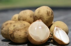Lanzones – Tropical Fruit with Many Health Benefits