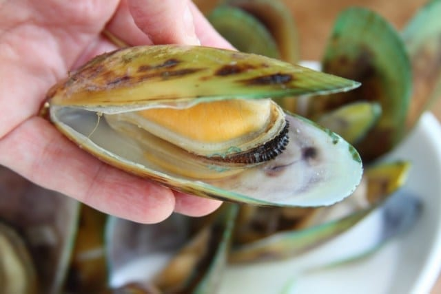green lipped mussel benefit for Health and Body