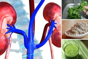Food and Herbs For Kidneys