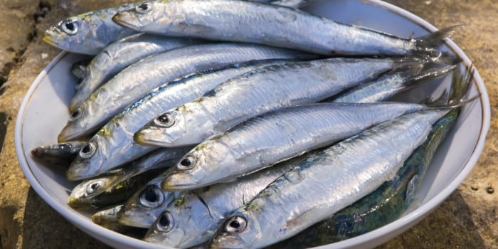 Sardines – top 10 health benefits of Sardines