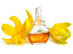 Ylang ylang essential oil – aphrodisiac & antiseptic property