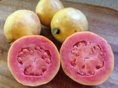 Guava – Top Health Benefits