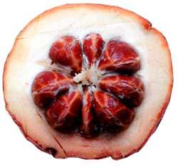 This is the fruit of velvet apple