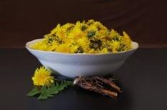 Dandelion uses and health benefits
