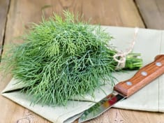 Dill – Nutritional facts and health benefits