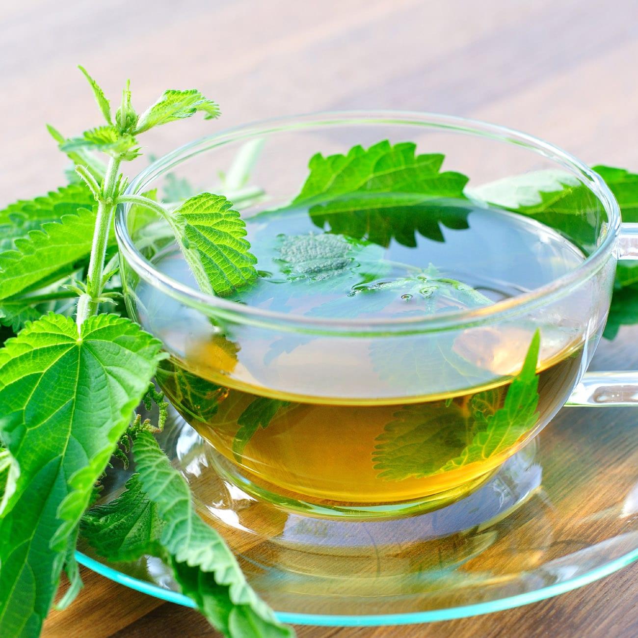 Nettle tea - Аmazing Benefits for