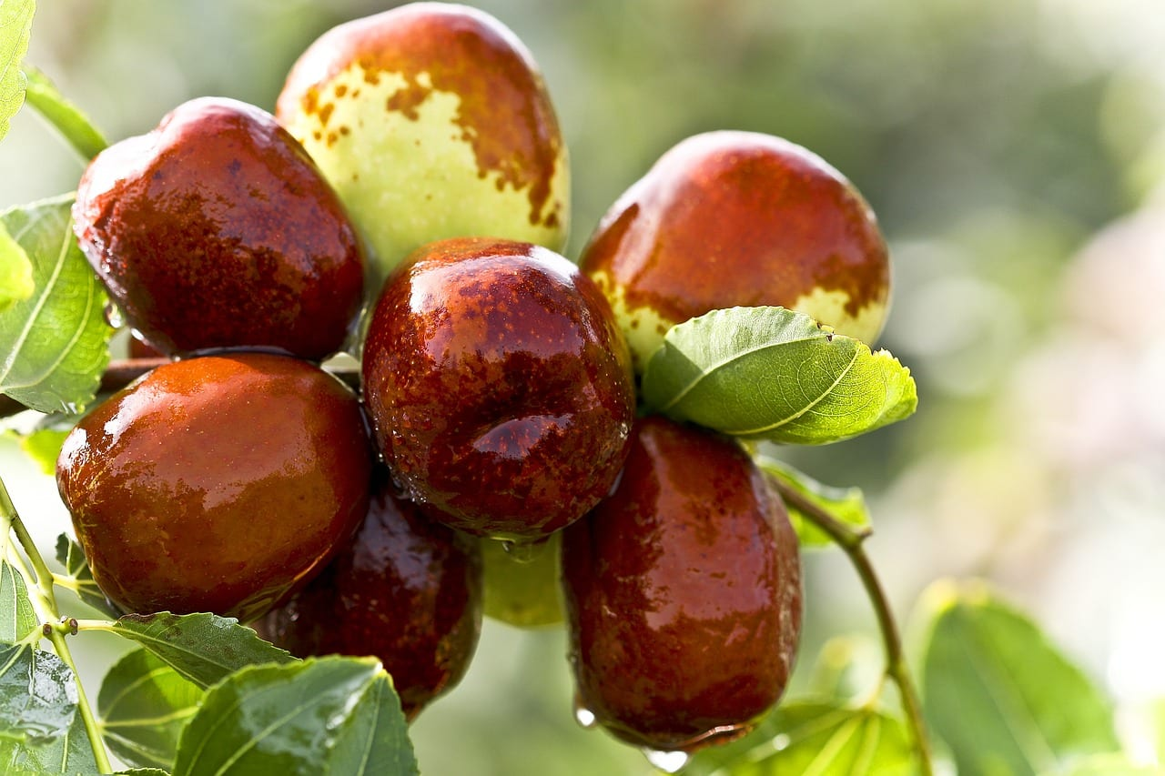 Benefits of weird jujube fruits