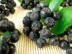 Chokeberries nutritional facts and health benefits